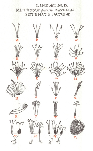 Sketch of the Linnaean Classification System