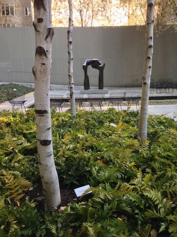 Birch Trees with Henry Moore in the MOMA Sculpture Garden
